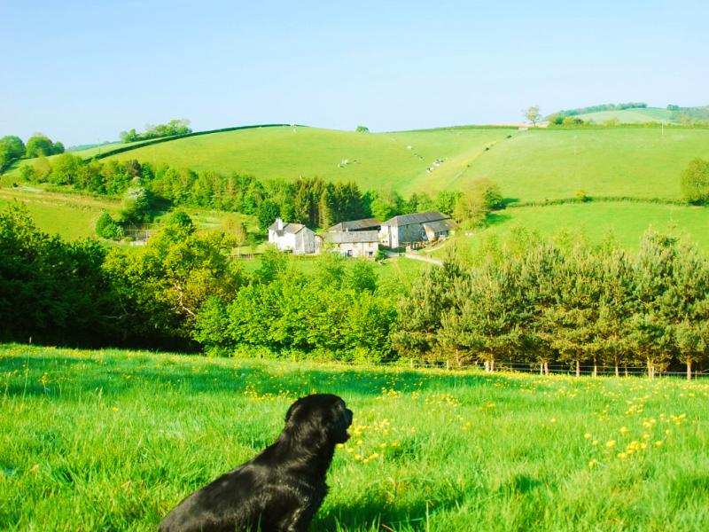 The Mill Cottage is snuggled into Lurcombe valley - the perfect place to escape...