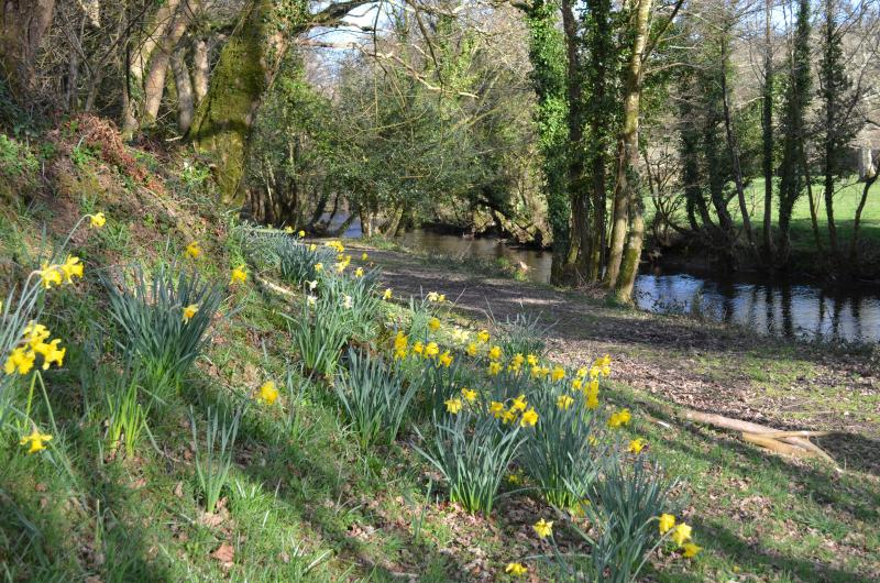 Spring down by the River