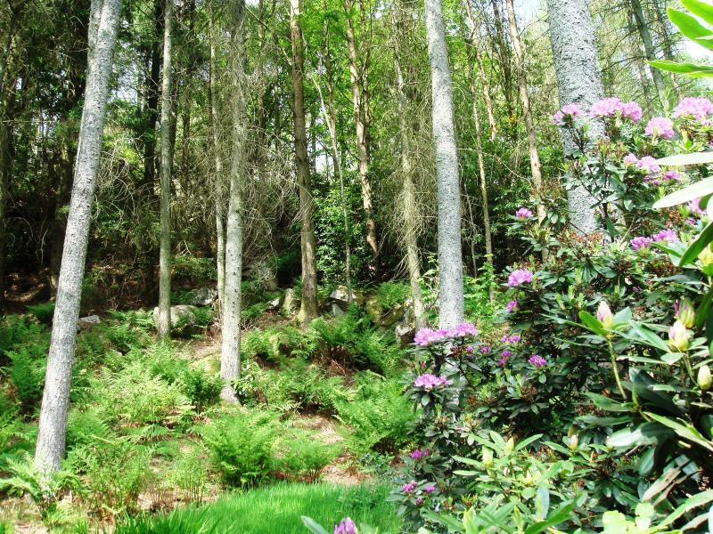 The forest above the cottage