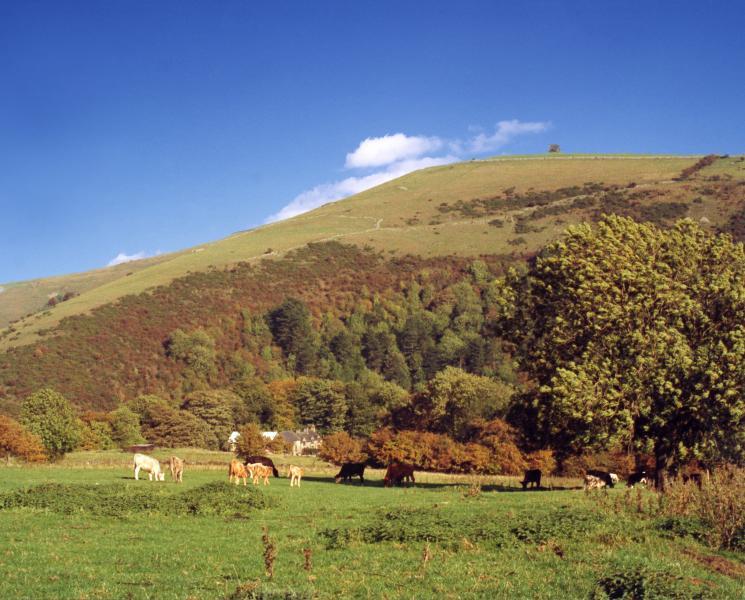 Swainsley granja enclavado en el valle del colector.