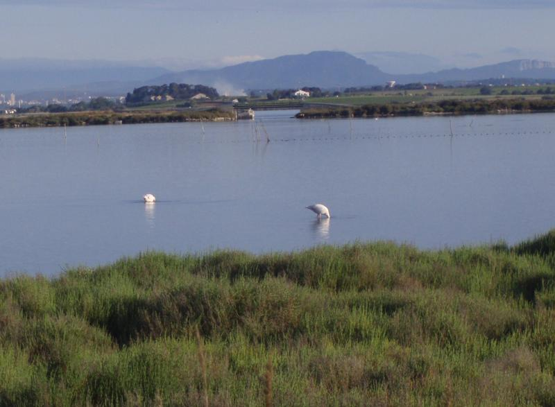 Flamingos on the coast