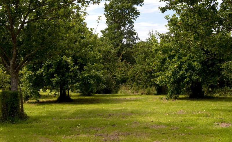 3 acre orchard for picnis and BBQ's, or the children to play ball games. fruit available in aur