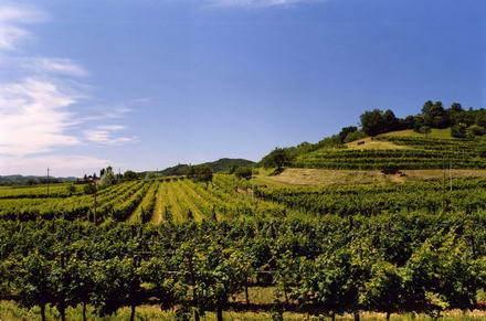 AGRITURISMO  TENUTA LA PERGOLA, vacation rental in Province of Asti