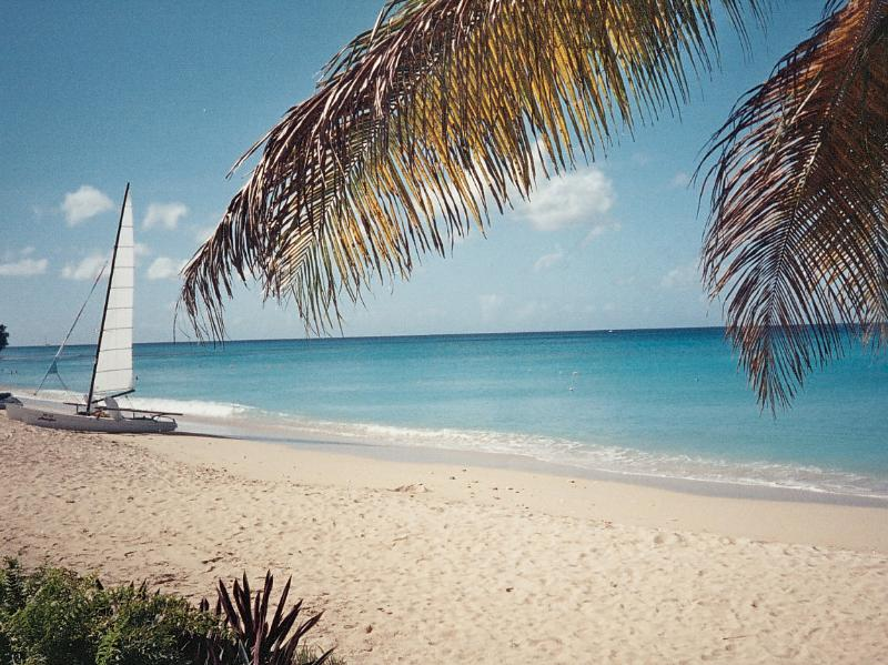Mullins Beach - hire a boat to see the turtles