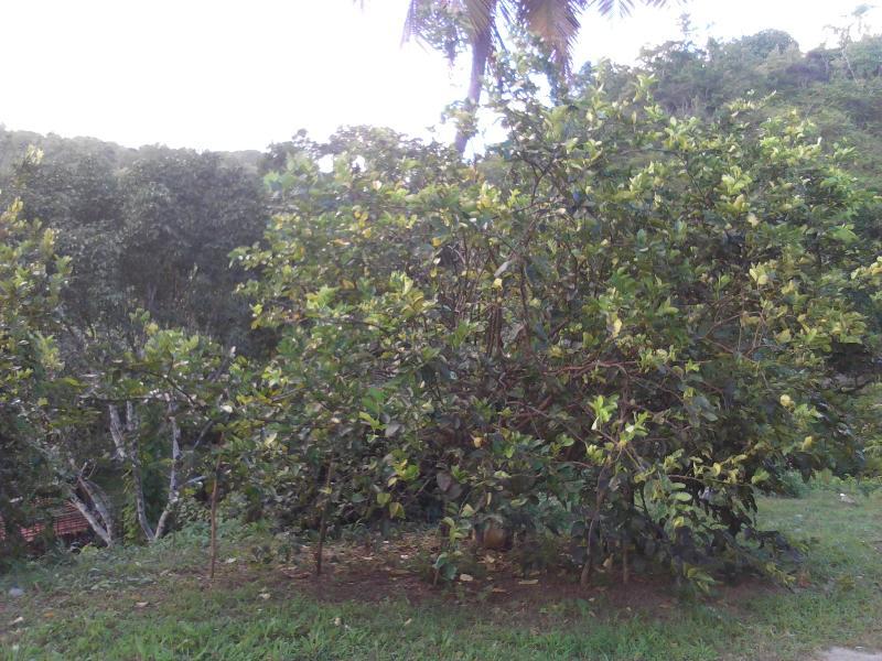 Un jardin porteur de fruits locaux
