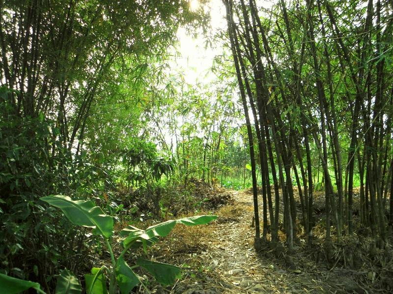 Green Village Homestay, vacation rental in Cai Rang