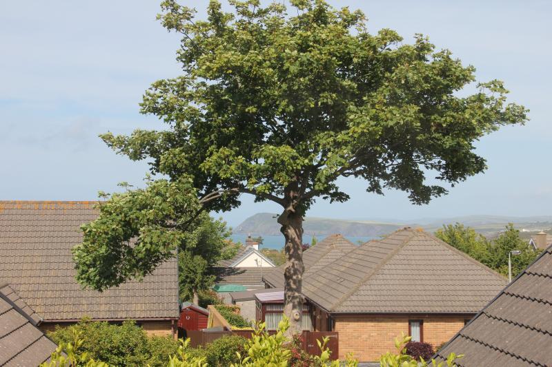 View of Dinas Head