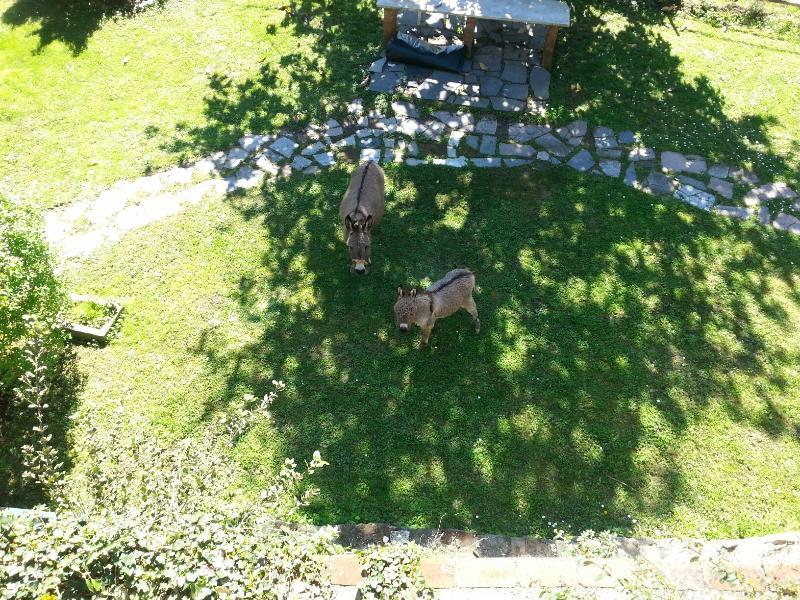Donkeys instead of a lawnmower