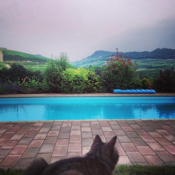 Swimming pool with cat.