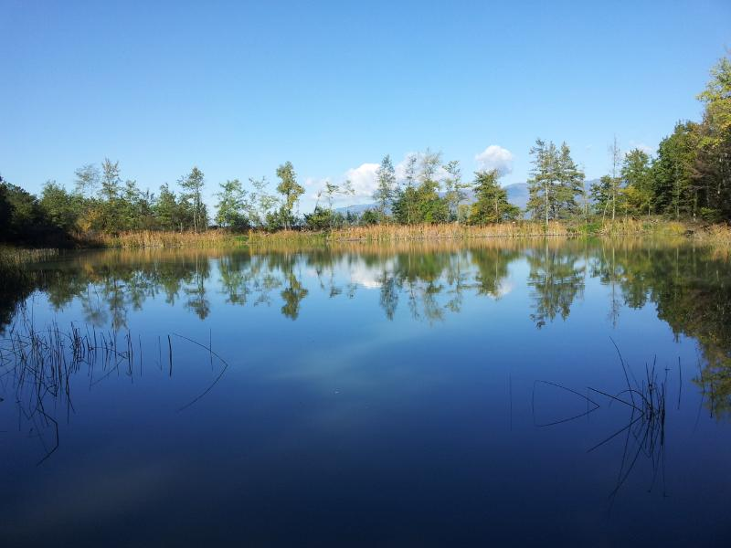 Our private lake where you can swimm  and fish