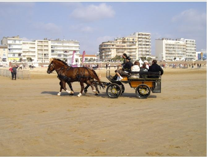 Horse show on the beach in September