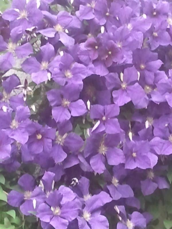 Les fleurs dans les jardins / jardins fleurs les couleurs changent constamment