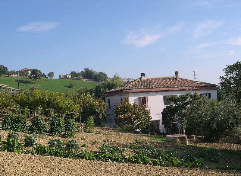 Casa Bianca's vegetable garden and orchard, which are laden with fruit & veg in summer