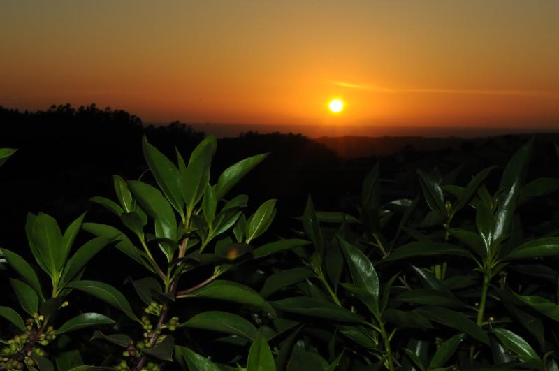 SUNSET VIEW FROM THE VILLA'S GARDEN, RELAX WITH A GLASS OF WINE FROM THE REGION