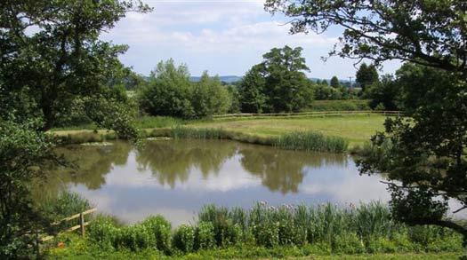 Fishing Lake at Milton Brook Estate