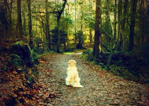 varios paseos y senderos en bosques cercanos