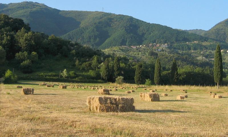 The hay season