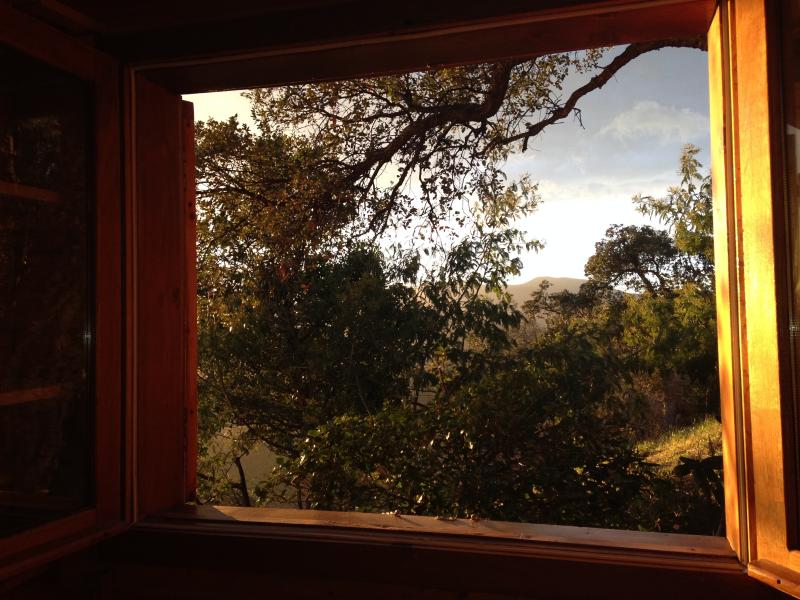 WINDOW WITH VIEW TO THE WOODS