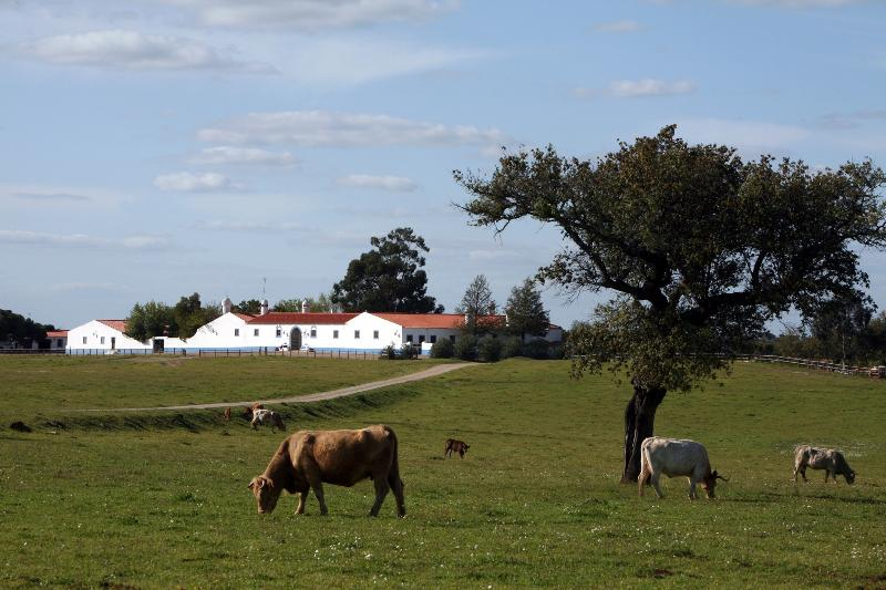 Herdade da Negrita, vacation rental in Beja District