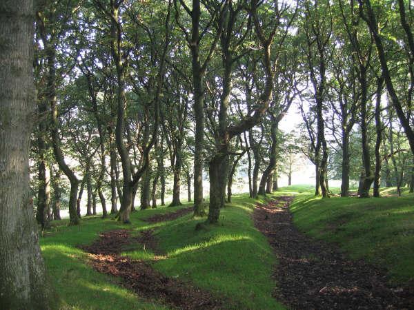 Oak Wood on the Farm Trail