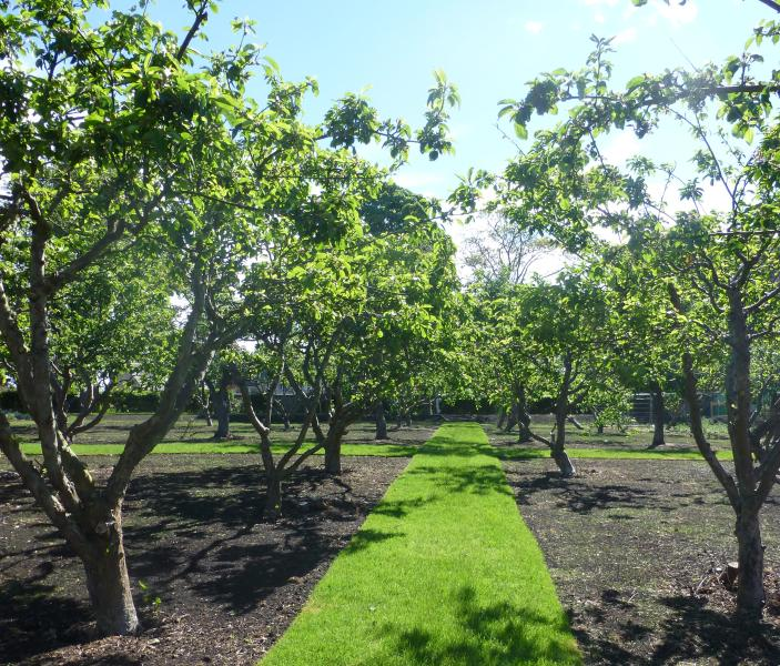 Listed Orchard (It has plums and apples which you are welcome to pick in season)