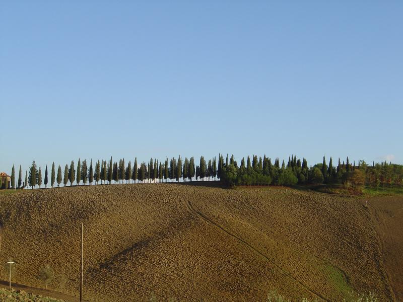 Azienda Agricola Il Poggio, holiday rental in Montaione