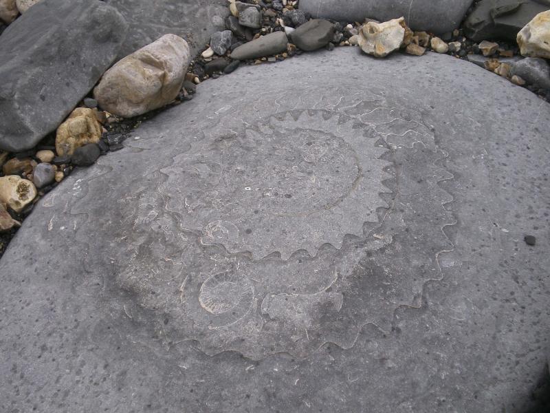 Monmouth beach ammonite