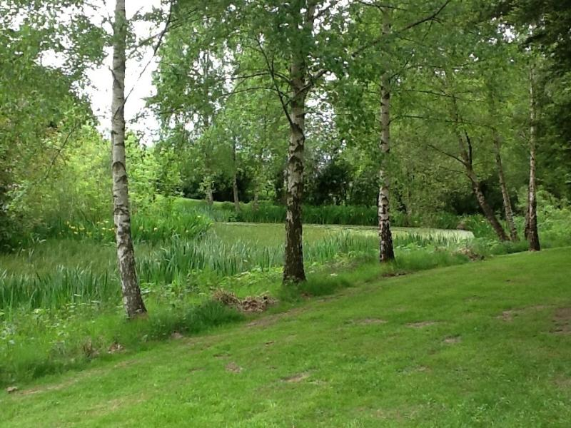 The wildlife pool, full of moor hens, mallards, dragonflies, newts, frogs and toads!