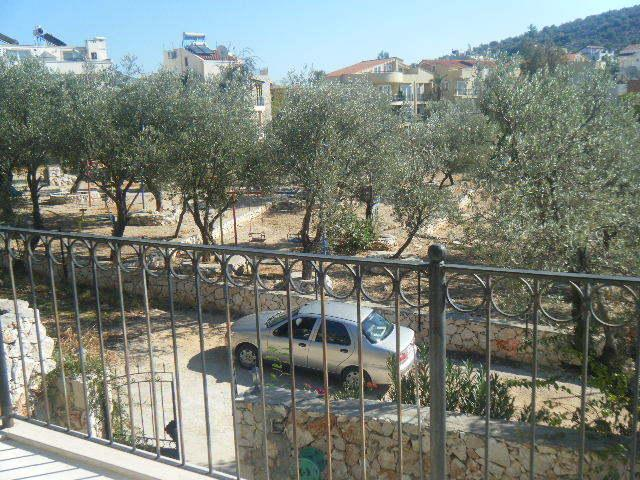 Olive groves and parking outside the villa
