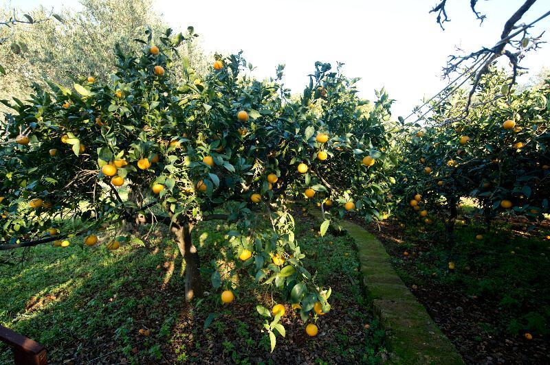 Giardino agrumeto bio a disposizione degli ospiti