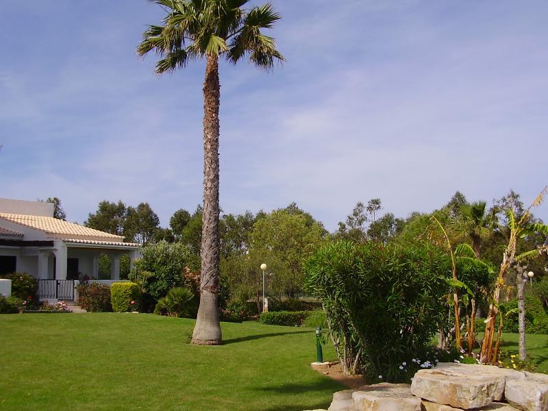 vue sur le jardin de terrasse