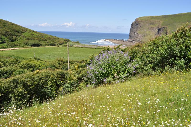 View from the lower bench in the garden over wild flowers to the sea