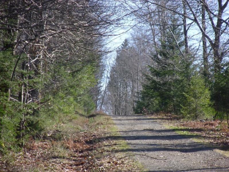 Quiet country woodland walks
