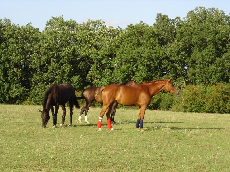 Caballos de la vecina escuela de equitación