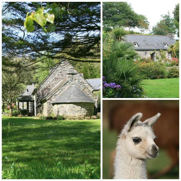 Our two cottages and a young lama.