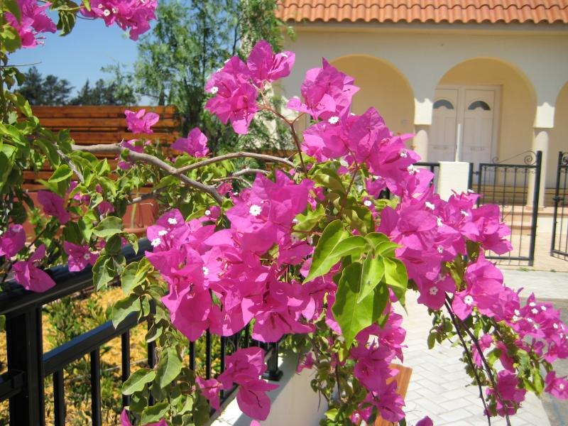 Established private garden area