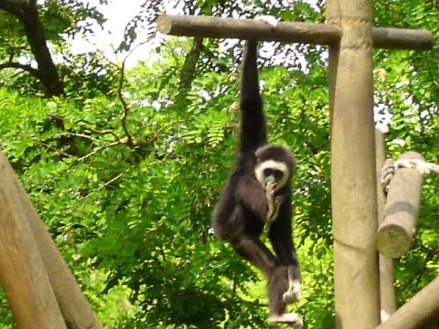 Bioparc - Zoo de Doué la Fontaine