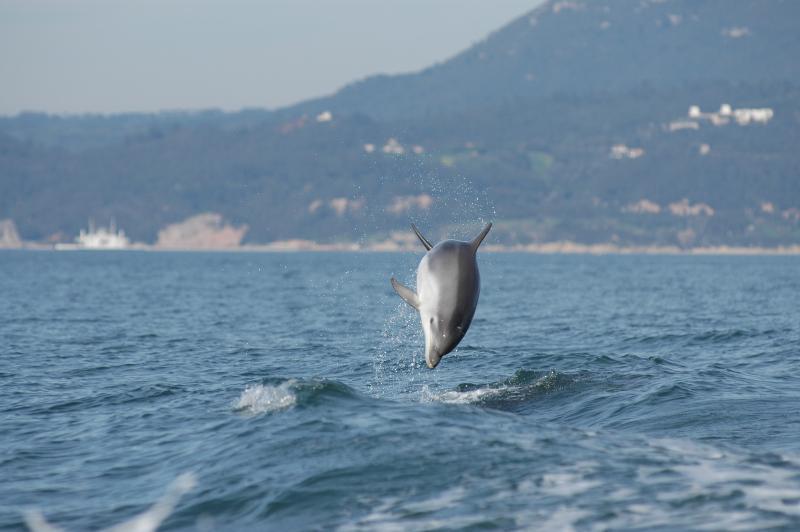 Delfini del Sado.