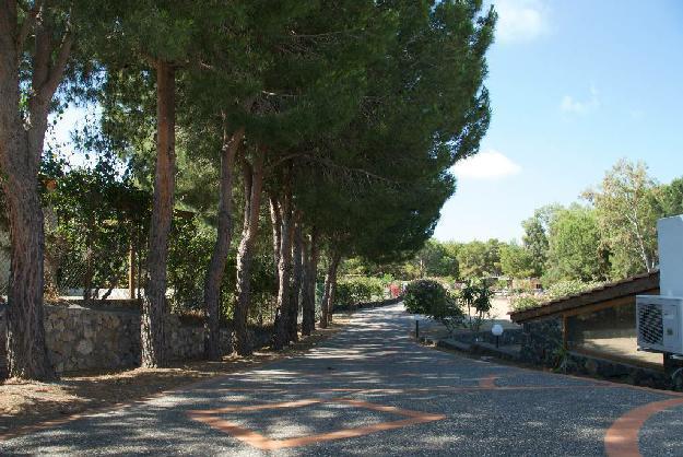 the Avenue in the garden