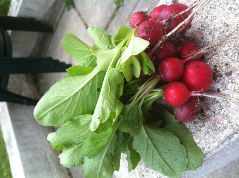 et let legumes du jardin potager - yummy vegetables from the garden