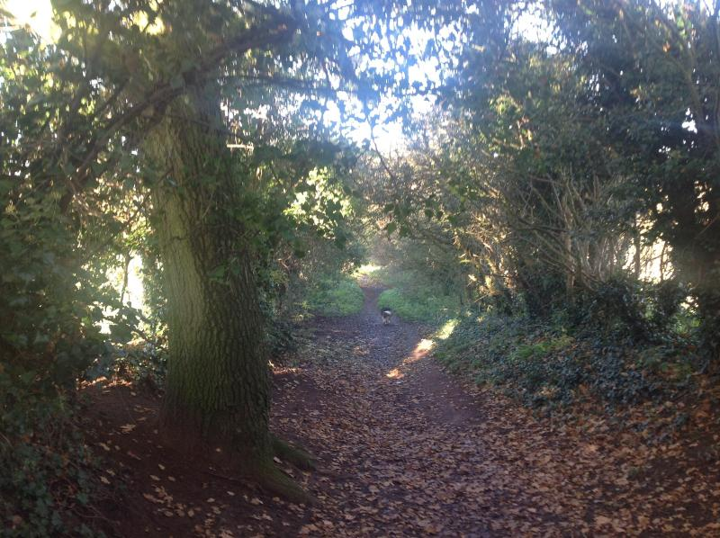 The bridle path that runs alongside leading to the beautiful canal