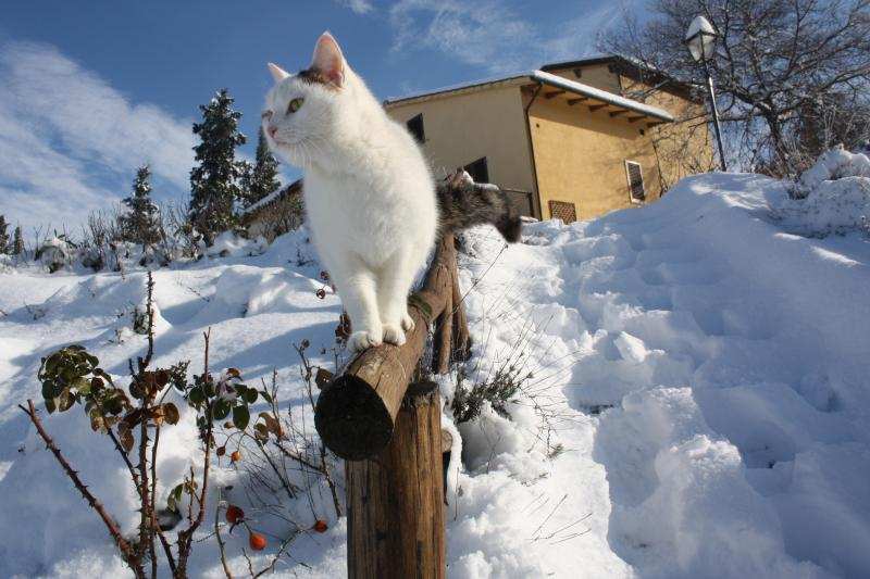 Our cat during the winter