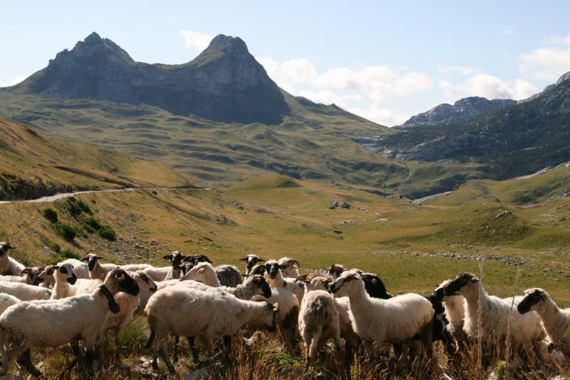View from road on 'ring of durmitor' drive/cycle route