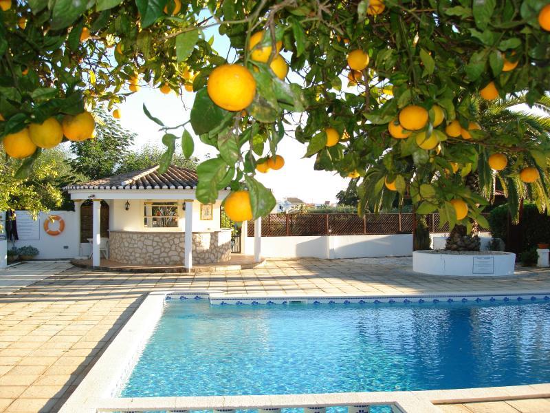 Orange trees on sun bathing terrace by the swimming pool.