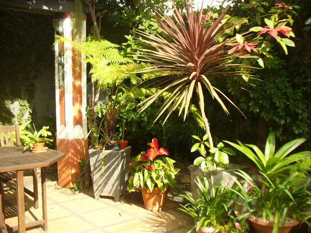 Corner of patio garden
