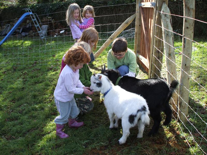 The Pygmy goats are great characters and are very popular with guests.