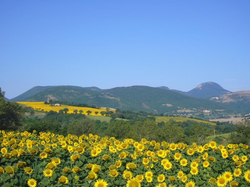 Sunflower field and hills