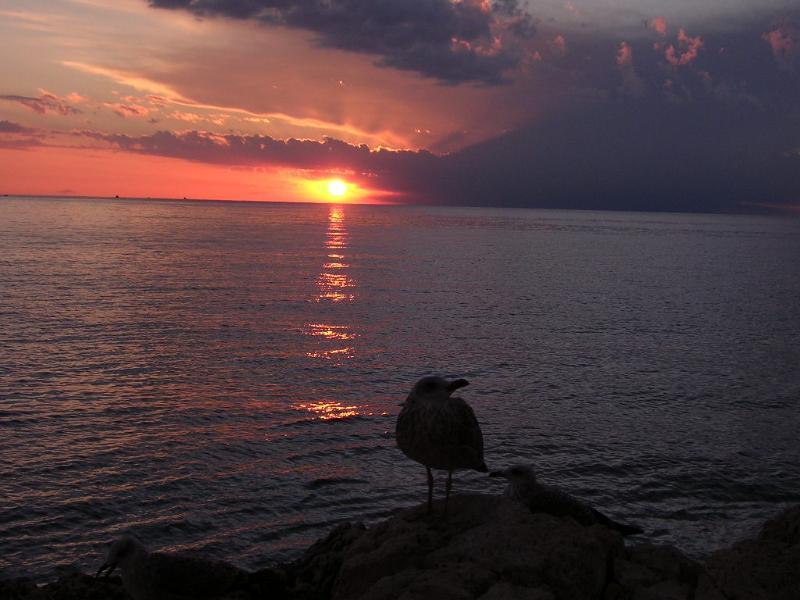 Rovinj sunset (and seagull!)