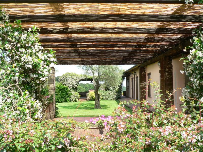 Blooming vines on the pergola
