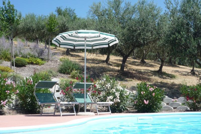 Het zwembad is omzoomd door olijfbomen, die onze eigen olie te leveren